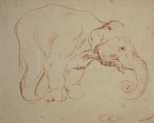 Daniel Chodowiecki: Stehender  Elefant.