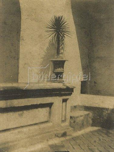 Baron Adolphe de Meyer: Topf mit einer Palme vor einer Mauer. 1910