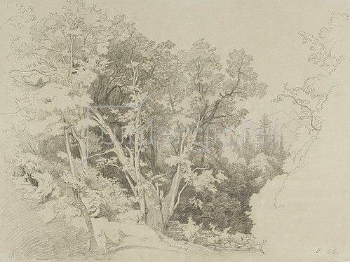 Johann Wilhelm Schirmer: Baumpartie mit dem gespaltenen Baum.
