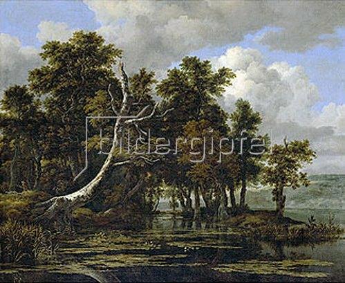 Jacob Isaacksz van Ruisdael: Eichen an einem See mit Wasserrosen.