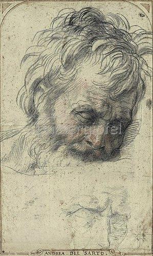 Andrea del (A.d'Agnolo) Sarto: Kopf des heiligen Josef, nach unten blickend.
