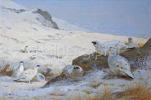 Archibald Thorburn: Alpenschneehühner. 1902