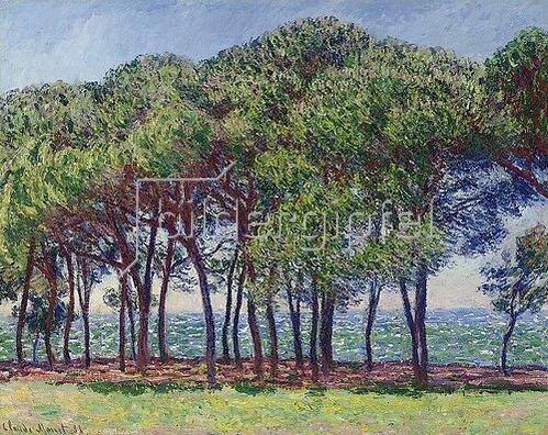 Claude Monet: Pinien am Cap d'Antibes. 1888