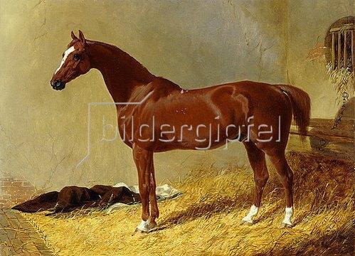 John Frederick Herring d.Ä.: Ein rotbraunes Rennpferd in einem Stall. 1843