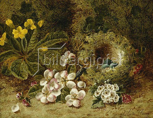 Oliver Clare: Apfelblüten, eine Primel und ein Vogelnest im Moos.