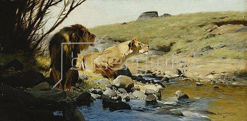 Wilhelm Kuhnert: Ein Löwe und eine Löwin an einem Bach.