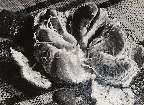 Aenne Biermann: Blutorange. 1929