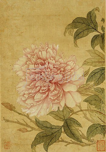 Yun Shouping: Pfingstrose. Yun Shouping (1633-1690). Blatt aus einem Album mit Blumen.