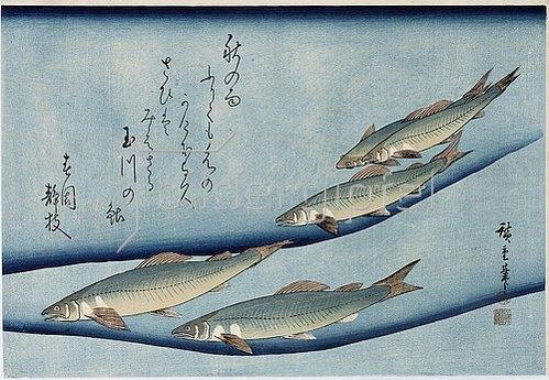 Utagawa Hiroshige: Bachforelle. Aus der Serie 'Sammlung von Fischen'.