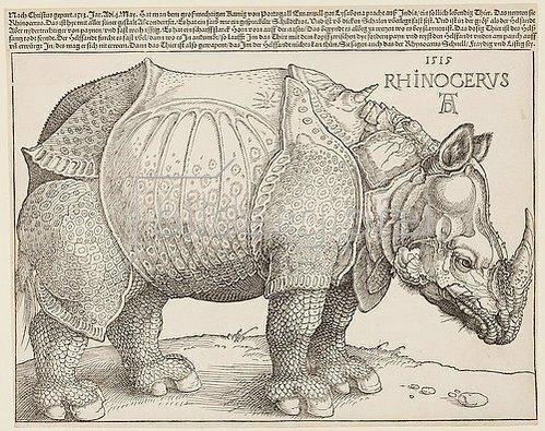 Albrecht Dürer: Rhinozeros. 1515
