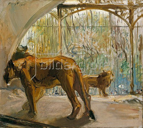 Max Slevogt: Schreitende Löwin im Käfig. 1901