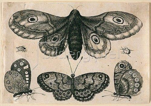 Wenzel Hollar: Eine Motte, drei Falter und zwei Käfer. 1646. Aus dem 'Muscarum Scarabeorum', Antwerpen 1646