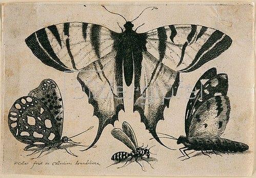 Wenzel Hollar: Drei Falter und eine Wespe. 1646. Aus dem 'Muscarum Scarabeorum', Antwerpen 1646.