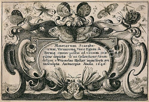 Wenzel Hollar: Titelkupfer zum 'Muscarum Scarabeorum', Antwerpen 1646.