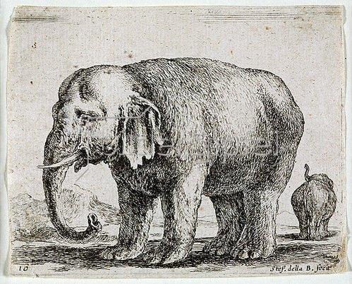 Stefano della Bella: Elefant. 1641