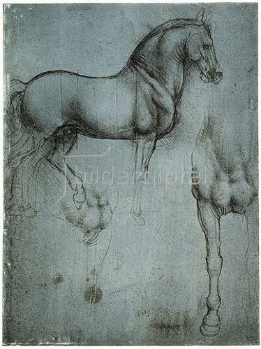 Leonardo da Vinci: Studie eines Pferdes.