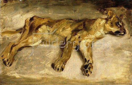Eugene Delacroix: Eine schlafende Löwin. Um 1830