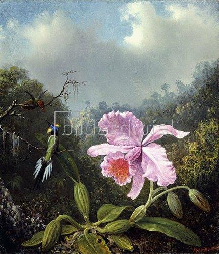 Martin Johnson Heade: Stillleben mit Orchidee und zwei Kolibris. Wohl 1890er-Jahre