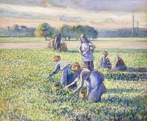 Camille Pissarro: Erbsenernte (La Récolte des Pois). 1887