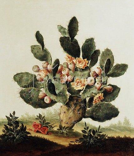 Albert van der Eeckhout: Ein Kaktus.