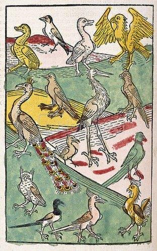 Deutsch: Verschiedene Vogelarten in einer Landschaft. Aus 'Buch der Natur', von Konrad von Megenberg (um 1309-1374). Gedruckt von Johann Schönsperger, Augsburg 1499