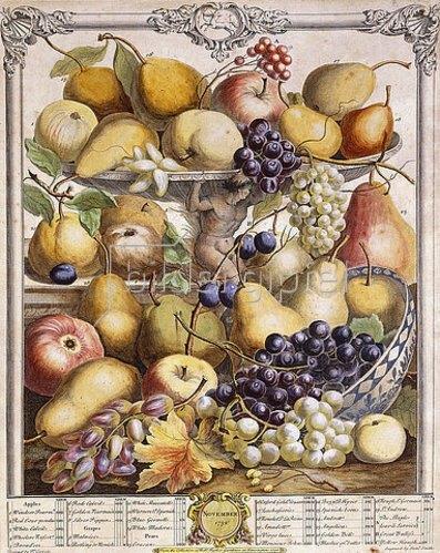 James Smith: November 1732, mit saisonalen Früchten wie Äpfeln, Birnen und Weintrauben etc. Aus 'Twelve Months of Fruits', von Robert Furber (1674?-1756). Kensington, 1732