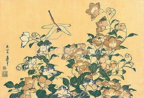 Katsushika Hokusai: Chinesische Glockenblume und Libelle. Aus 'Die große Blumenserie'.