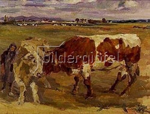 Max Feldbauer: Zwei Ochsen in Landschaft.