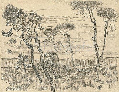 Vincent van Gogh: Sechs Pinien nahe der Einzäunung. 1889