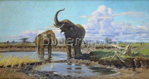 Wilhelm Kuhnert: Elefanten an der Wasserstelle.