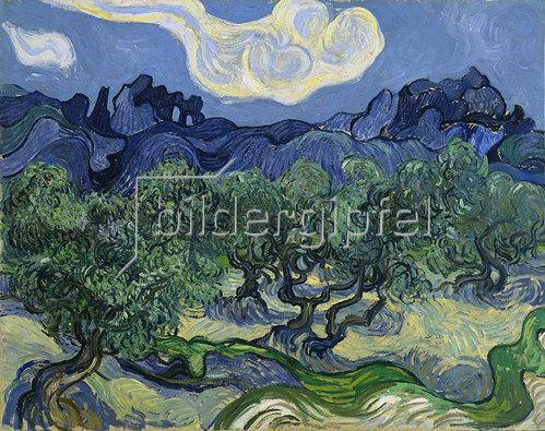 Vincent van Gogh: Olivenbäume 1889