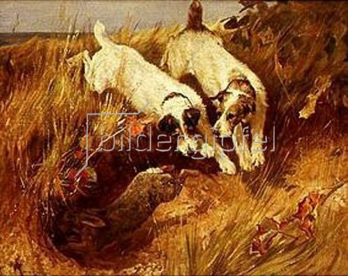 Arthur Wardle: Zwei Foxterrier jagen ein Wildkaninchen. 1904.