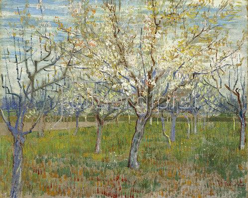 Vincent van Gogh: Rosa Obstgarten 1888