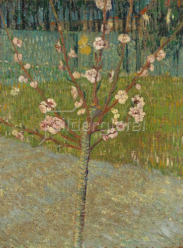 Vincent van Gogh: Blühender Mandelbaum