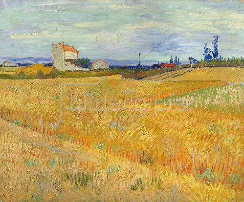 Vincent van Gogh: Weizenfeld