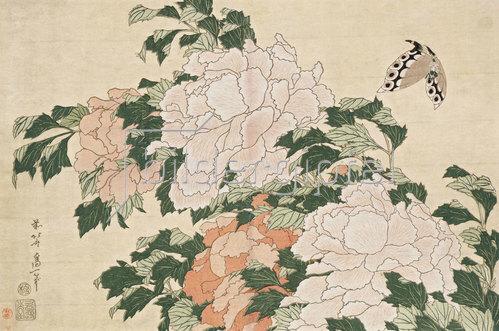 Katsushika Hokusai: Rosafarbene und rote Pfingstrosen und ein Schmetterling.