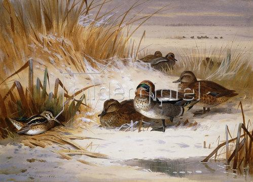 Archibald Thorburn: Mallard-Enten und Schnepfen im Winter. 1898