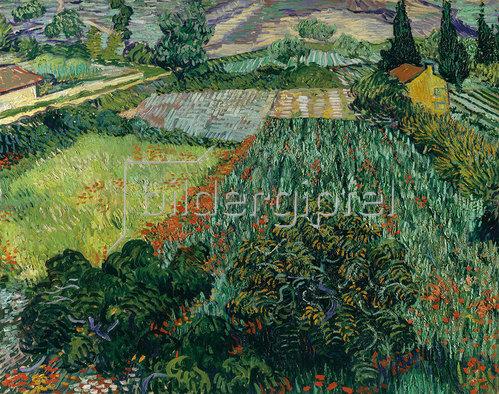 Vincent van Gogh: Mohnfeld und Felder 1889