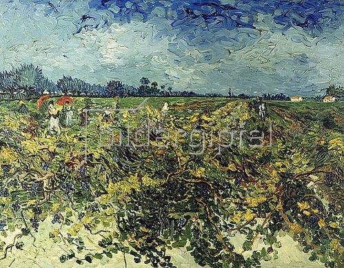 Vincent van Gogh: Der grüne Weingarten. 1888.