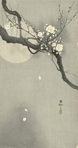 Ohara Shôson: Pflaumenblüte bei Vollmond