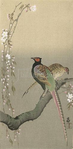 Ohara Shôson: Fasanenpaar in Kirschblüten