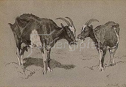Anton Braith: Zwei Geißen, stehend. 1879.