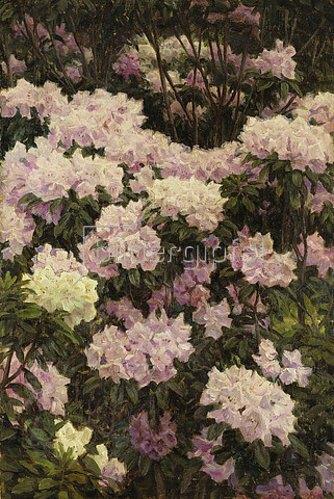 Alfrida Baadsgaard: Rhododendron-Blüten. 1890