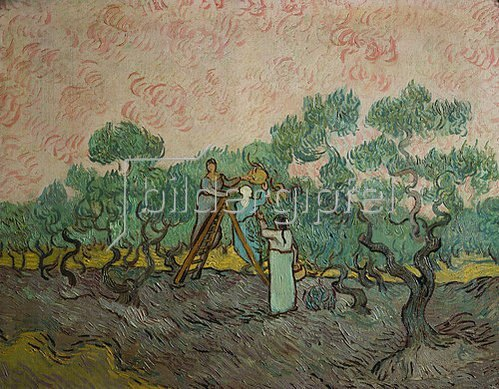 Vincent van Gogh: Oliven-Ernte. 1889.
