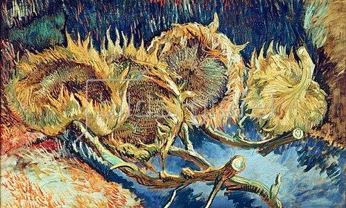 Vier Abgeschnittene Sonnenblumen Von Vincent Van Gogh Kunstdruck