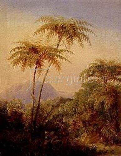 Johann Moritz Rugendas: Baumfarn aus dem brasilianischen Urwald. 1830.