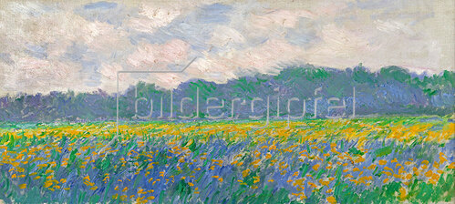 Claude Monet: Field of Yellow Irises at Giverny, 1887