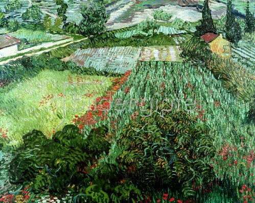 Vincent van Gogh: Mohnblumenfeld