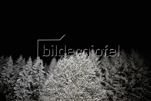 Christoph Hellhake: Baumfeen 4