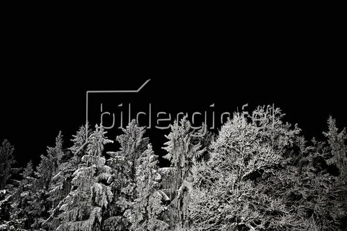 Christoph Hellhake: Baumfeen 5